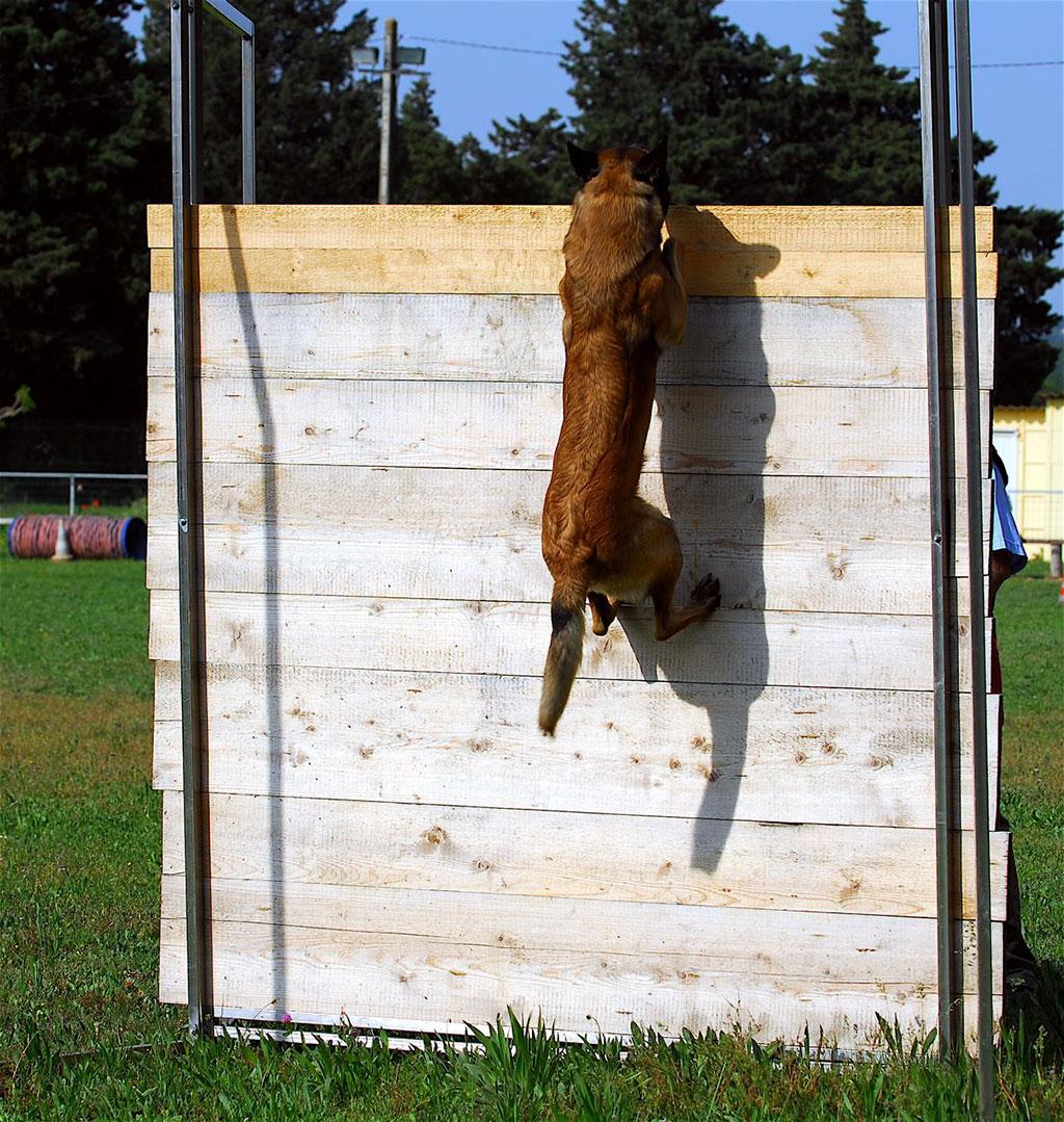 club canin 09